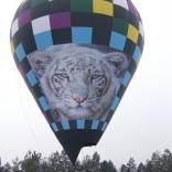 balon v.č. 801